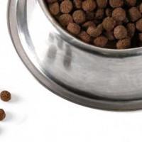 alimento-para-perros